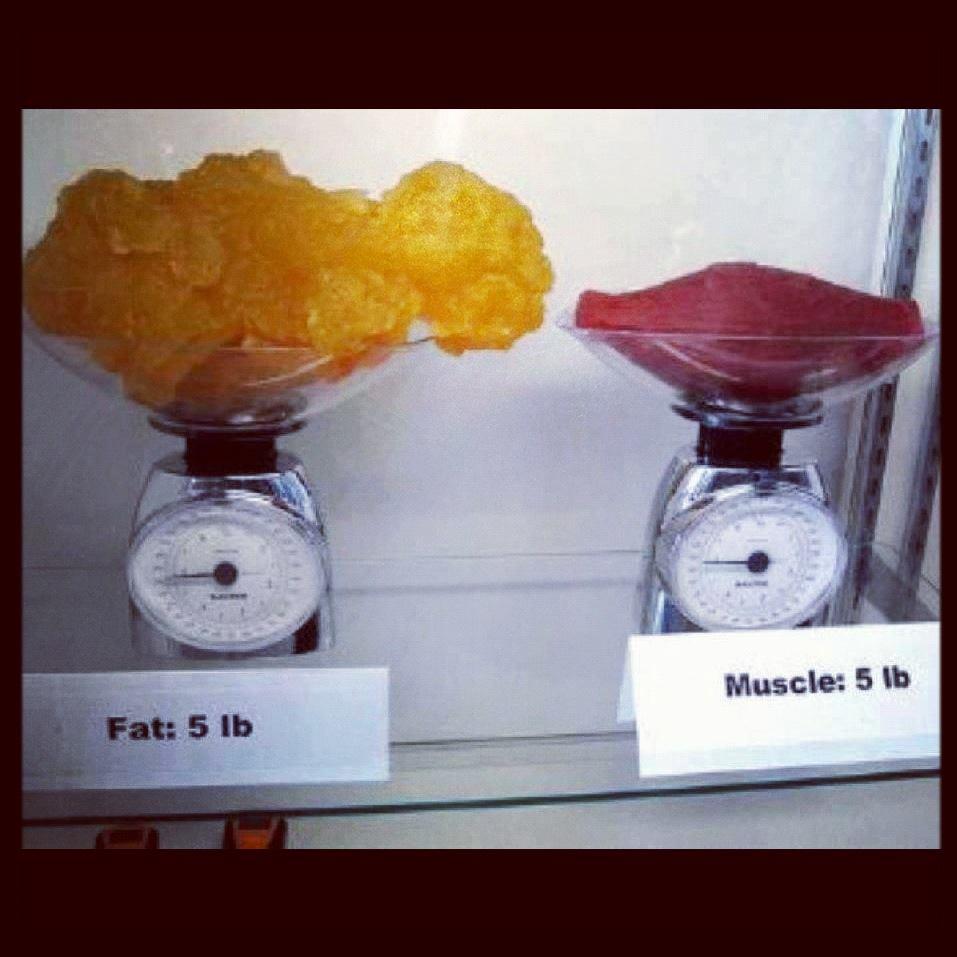 5 Lb Fat Vs  5 Lb Muscle Debate