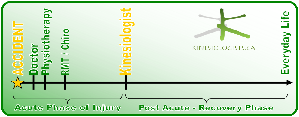 Active Rehab Process and the Kinesiologist